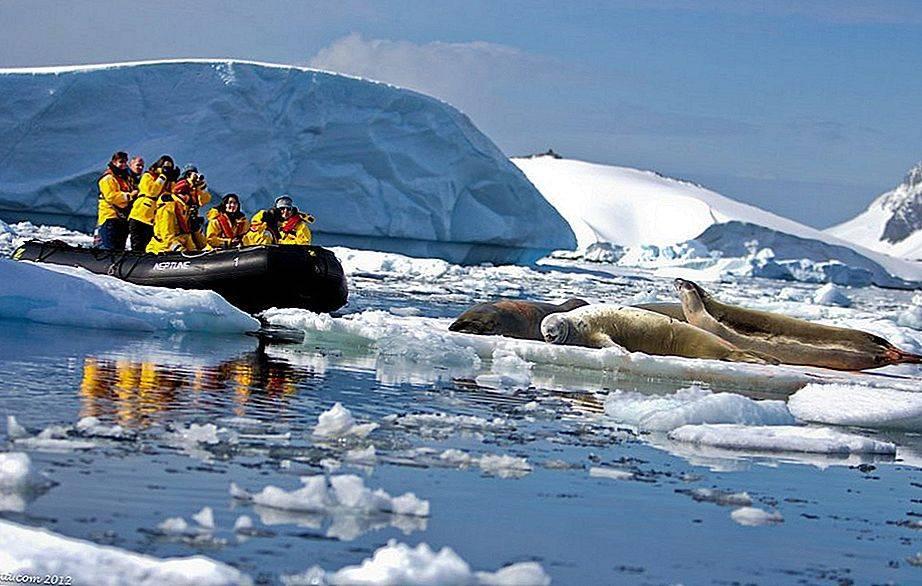 Почему американцы бросили легендарный вездеход «снежный крейсер» в антарктиде и что с ним стало: факты из истории