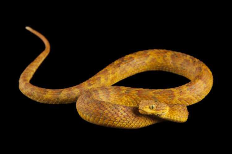 Тест драйв dodge viper - обуздать зверя (viper srt-10 (2008))