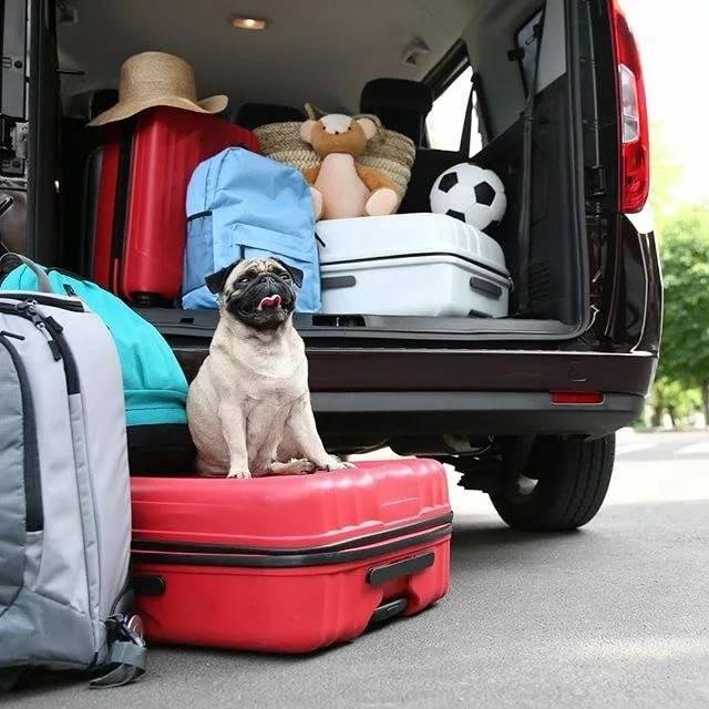 Семьей в путешествие на автомобиле: что не забыть