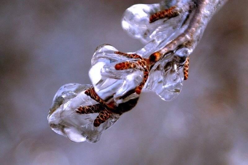 Заснеженное звёздное серебро - genshin impact - гайды и прохождение